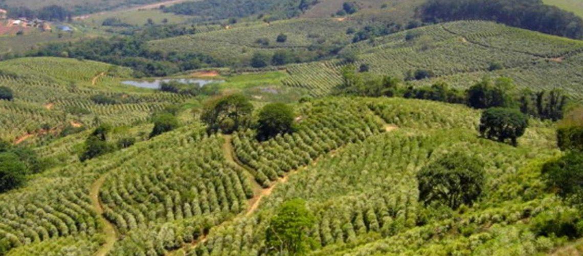 Café especial do Brasil história, produção e destaques